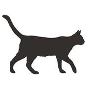 Katzenhanf
